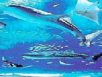 【GWスペシャル】レンタカー&朝食付!☆温水ジャグジー付屋内プール利用無料☆ラグナガーデンホテル(5/9迄)