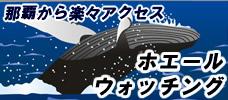 感動のホエールウォッチングツアー付!12月22日-3月30日出発