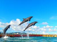 【ドルフィンファンタジー石垣島】この夏イチオシ商品!イルカを見て、触れて、一緒に泳いじゃおう!(10/30迄)