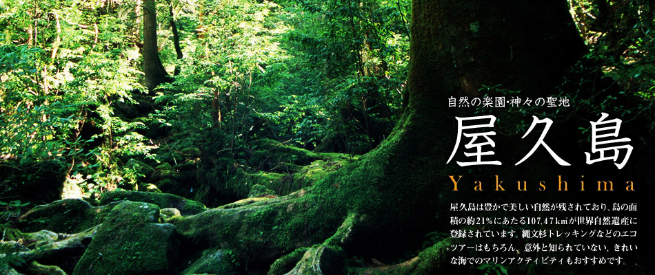 屋久島の画像 p1_2