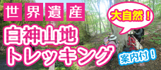 世界遺産・白神山地の大自然に感動!