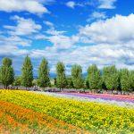 絶景の富良野・美瑛をめぐる!ここだけは絶対行っておきたい!夏の北海道 王道の観光スポット1泊2日モデルコース