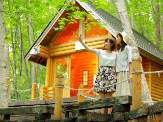 札幌から日帰りドライブ!旭山動物園と富良野・美瑛、ニングルテラス欲張りプラン!夏の北海道定番観光モデルコース