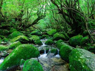 屋久島のおすすめ旅行プラン・モデルコース