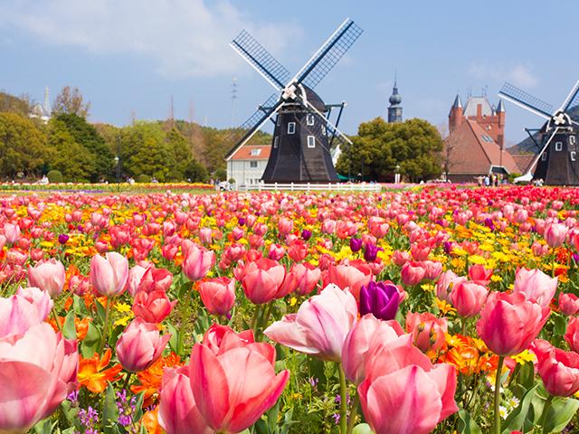 おすすめ2.季節の花々が咲き誇る『花の王国』