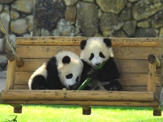 パンダに出会える『アドベンチャーワールド』!絶景も温泉も楽しめる南紀白浜1泊2日モデルコース