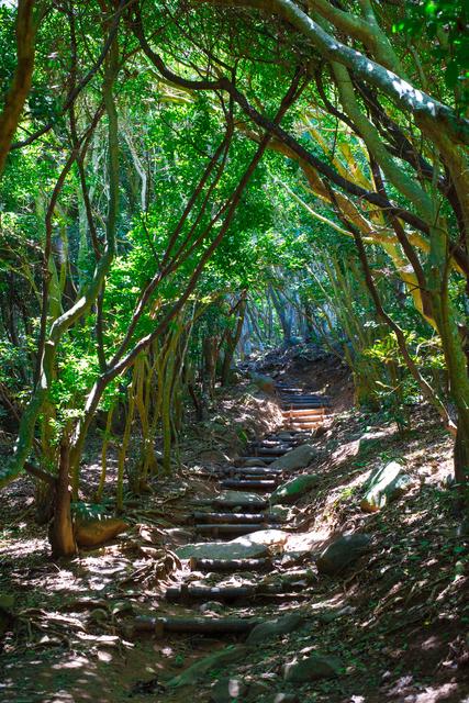 糸島のトトロの森(芥屋の大門公園)