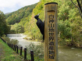 癒しの森『世界遺産 白神山地』弘前から気軽に行けるトレッキング!日帰りモデルコース