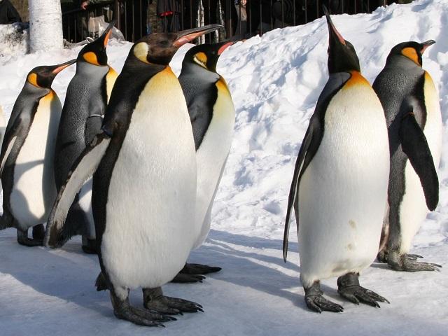 旭山動物園(冬期)
