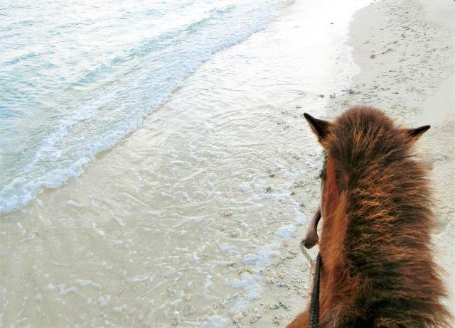 久米島牧場 浜散歩