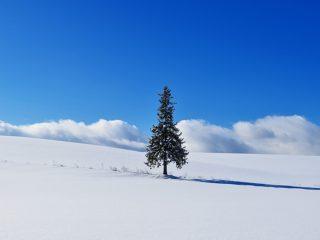 青い池だけじゃない! 冬の美瑛観光を1泊2日でとことん楽しむドライブコース