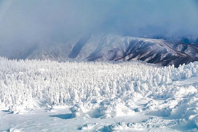蔵王の樹氷