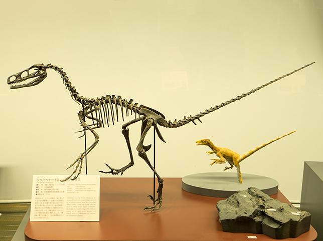 おすすめ施設3.『福井の恐竜』
