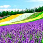 富良野・美瑛の絶景をふたり占め!カップルで回りたいおすすめ観光スポット!1泊2日ロマンチックドライブコース