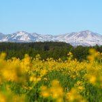 北海道最高峰・旭岳の大自然と旭川グルメを巡る!2泊3日の道北観光モデルコース